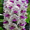 orchidscloset